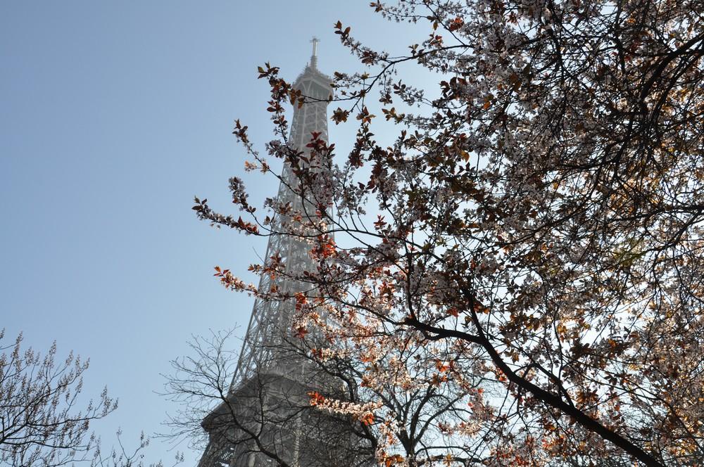 Eifflov stolp v cvetju1